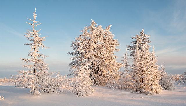 zim.skaz